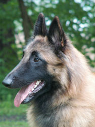 picture by kennel Bastdal